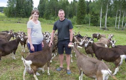 Linda Pajo ja Kermo Rannamäe kitsedega